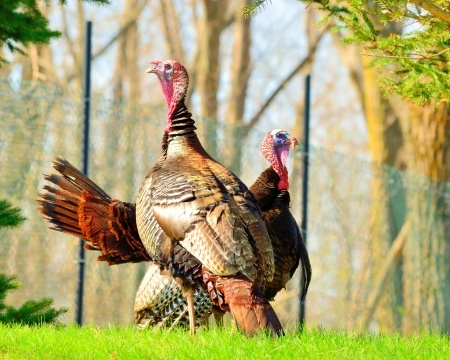 """Forks don't work on these kinds of turkeys!"" – my dad"