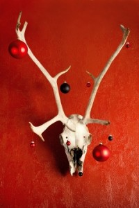 Deer skull decorated for Christmas hanging in a red wall