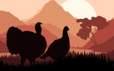 Hunting turkey is tough. Try these tips to bag that gobbler!
