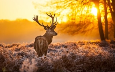 Hunting culture might be more important than you think