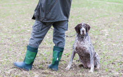 Making sure your hunting dog is ready to work