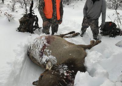 Cow Elk (2017)