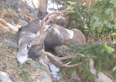 Deer (2008)
